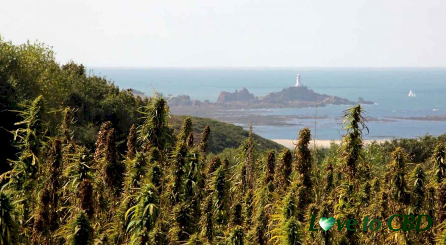 The island of Jersey grants licence to produce CBD