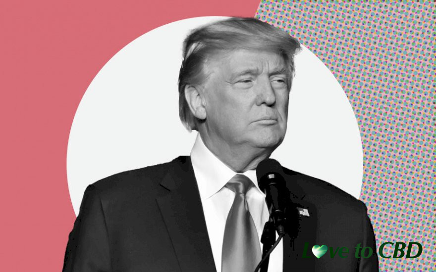 Election 2020: Where Donald Trump Stands on Cannabis